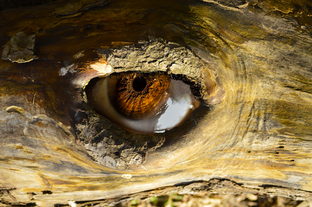 looking eye from a tree