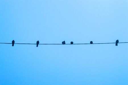 Pigeons are sitting on a wire against the sky close up Фото со стока