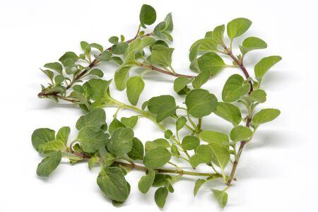 oregano: oregano herb on white background