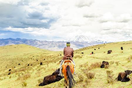 ヤクの群れとチベットの高地で遊牧民の表示します。