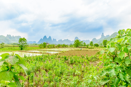 View on rice fields and karst hill by Yangshuo in China Stock Photo
