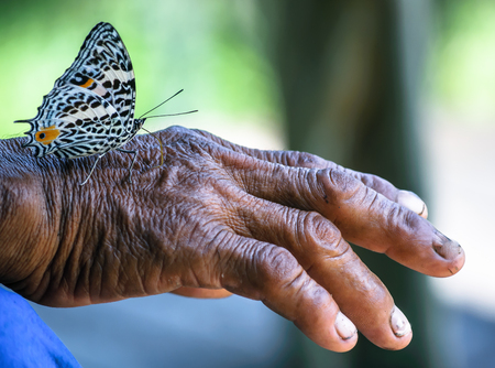 View on butterfly sitting on Hand of old man Stock Photo