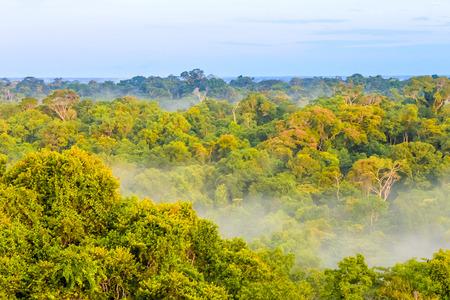 View on the morning fog over the brazilian rainforest in Brazil