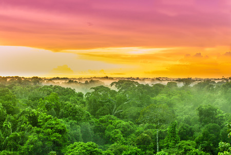 브라질의 열대 우림 나무 위에 자주색 석양을 볼 수 있습니다.