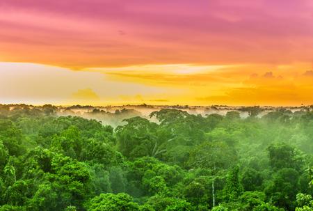 Vue sur le coucher de soleil violet sur les arbres de la forêt tropicale au Brésil Banque d'images