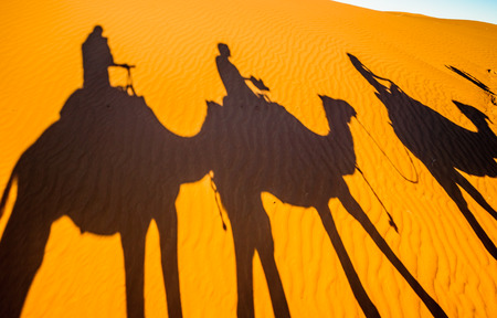 View on shadows of Camels in the sand of the Sahara desert - Morocco