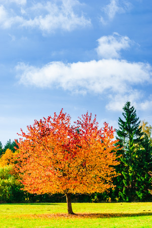 View on beautiful coulored tree of autumn landscape in Germany
