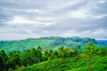 Tea Plantation from Lipton Seat next to to Haputale, Sri Lanka Stock Photo