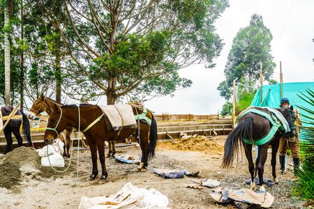 Mule with heavy load in Salento, Colombia