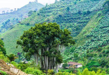 Green landscape next to the village of Jardin in Colombia Zdjęcie Seryjne