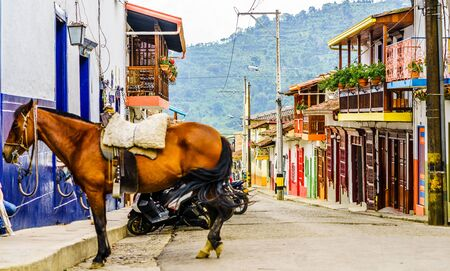 Horse in the colonial village of Jardin in Colombia