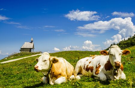 View on cows in front of Steinlingkapelle next to Kampenwand mountain, Bavaria