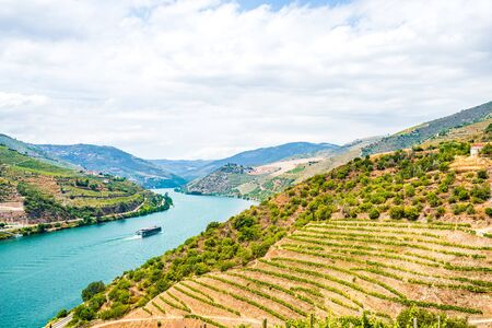 View on Vineyards in the Valley of the River Douro, Portugal 免版税图像