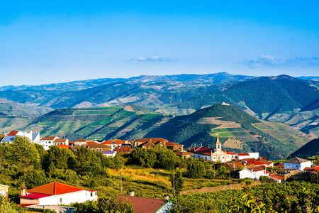 Vineyard in Provesende village in the Douro Valley region, Portugal 免版税图像 - 142154328
