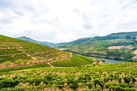 Vineyards in the Valley of the River Douro, Portugal 免版税图像 - 142154308