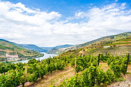 Vineyards in the Valley of the River Douro, Portugal 免版税图像 - 142154223