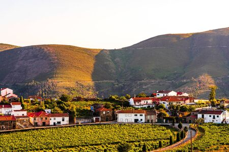 View on Vineyard in Provesende village in the Douro Valley region, Portugal 免版税图像