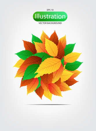 leave: colorful leaves