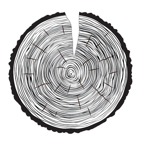 rings on a tree: Tree rings background annual tree macro vector