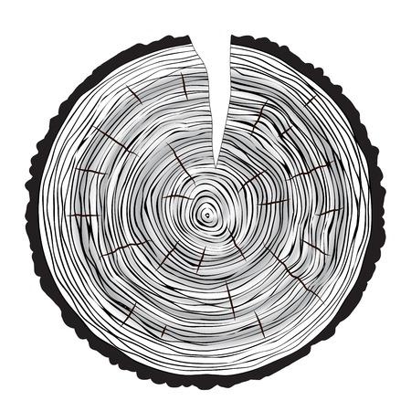 cut logs: Tree rings background annual tree macro vector