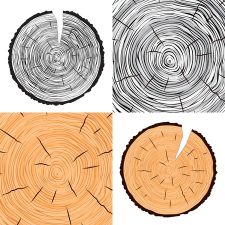 wood cross section: Tree rings background annual tree set vector