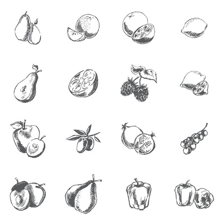converted: Vegetables, berries and fruits. Pen sketch converted to vectors. Illustration