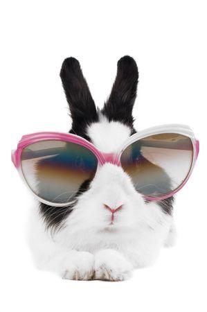 lapin blanc: lapin dans les lunettes isol�s  Banque d'images