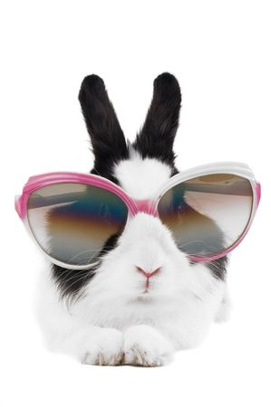 rabbit in Sunglasses isolated photo