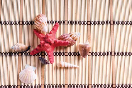 sea shells on wooden background photo