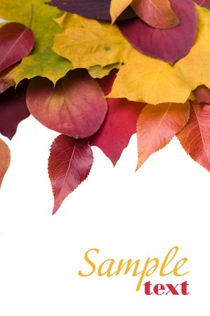 Autumn leaves Stock Photo - 8261630