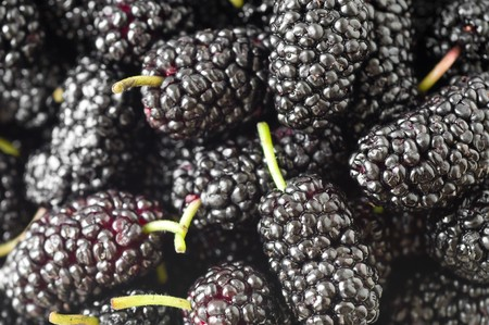 mulberries background