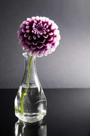 purple flower in vase on black background Stock Photo - 8261660