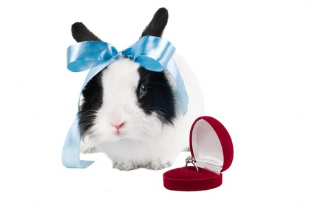 rabbit with blue ribbon and wedding ring in case