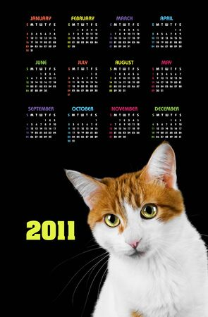 Vertical color calendar for 2011 year with cute red and white cat  photo