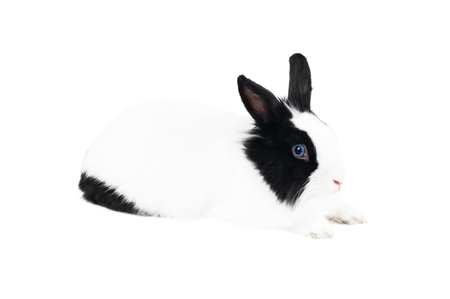 black and white  rabbit  isolated Stock Photo - 9112201