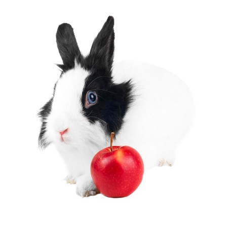 rabbit with red apple isolated Stock Photo - 9178806