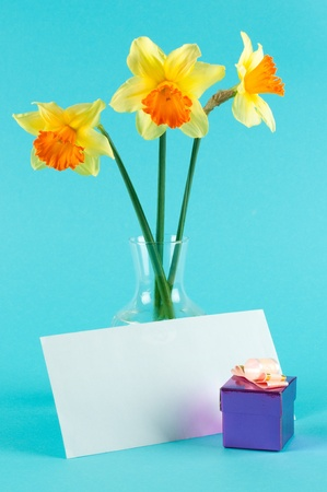 yellow narcissus in vase with card and gift-box on blue background
