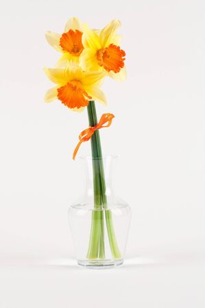 yellow narcissus in vase isolated on white Stock Photo