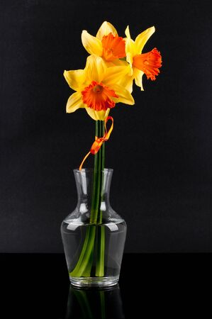 yellow narcissus in vase on glossy background Stock Photo - 12815964