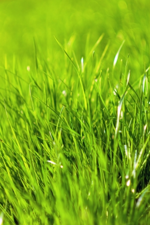 Close up of green grass Stock Photo - 15407849