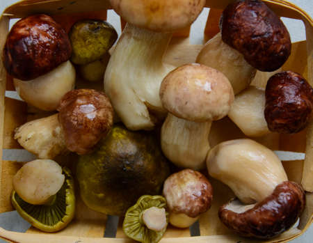 Fresh porcini mushrooms collected in the forest for cooking. Banco de Imagens