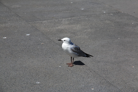 Bird in Auckland city in New Zealand