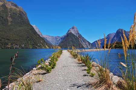 Cruise to Milford Sound Fjord, New, Zealand 免版税图像