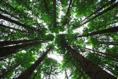La foresta rossa è il parco nazionale di Rotorua