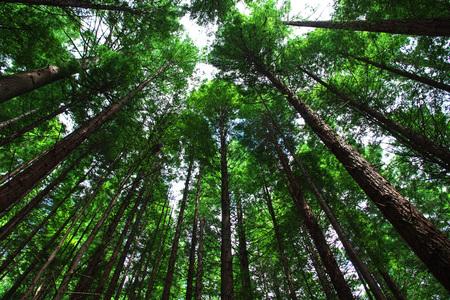 Rode bos is nationaal park in Rotorua Stockfoto