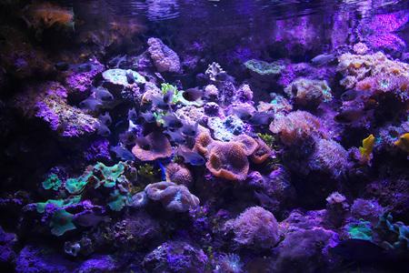 Aquarium with great white shark in Sydney, Australia