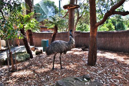 Wild animals at the Taronga zoo in Sydney, Australia Standard-Bild - 122012519