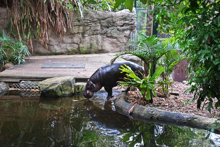 Wild animals at the Taronga zoo in Sydney, Australia Standard-Bild - 122013287