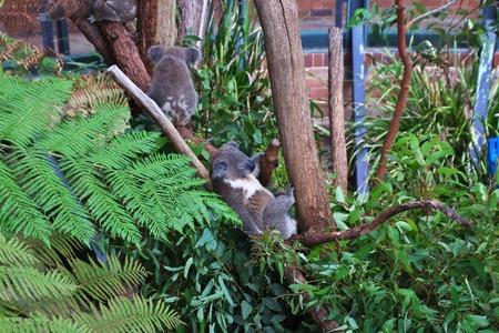 Wild animals at the Taronga zoo in Sydney, Australia