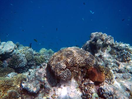 Snorkelen op het Great Barrier Reef, Australië